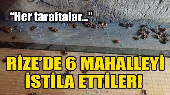RİZE'DE 6 MAHALLEYİ İSTİLA ETTİLER!