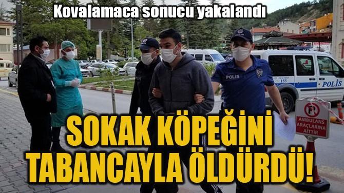SOKAK KÖPEĞİNİ TABANCAYLA ÖLDÜRDÜ!