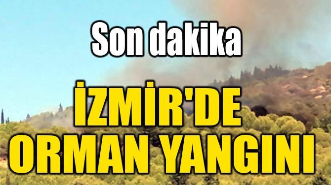 İZMİR'DE  ORMAN YANGINI