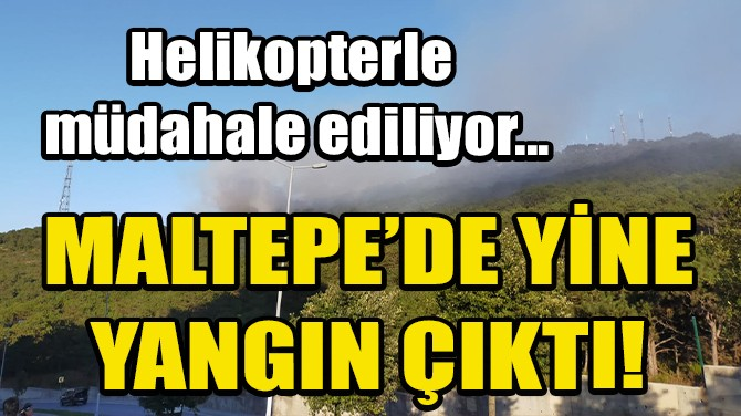 MALTEPE'DE ORMAN YANGINI