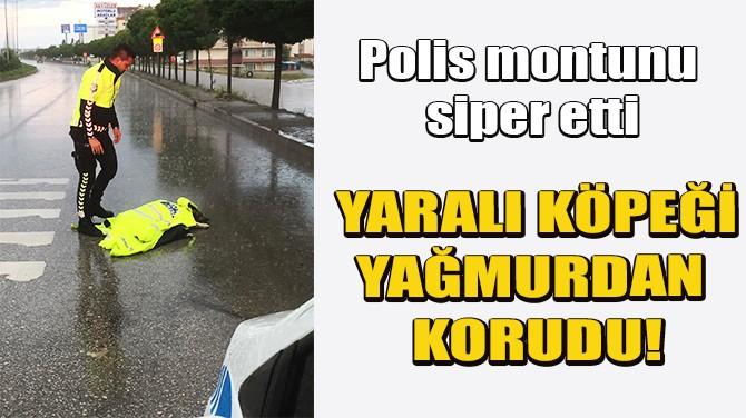 POLİS MEMURU, MONTUYLA YARALI KÖPEĞİ YAĞMURDAN KORUDU
