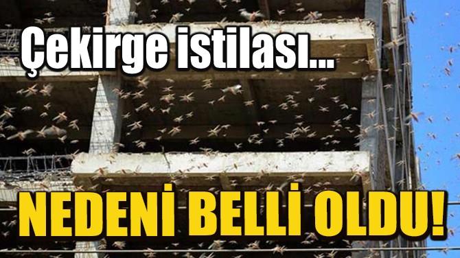 ÇEKİRGE İSTİLASININ NEDENİ BELLİ OLDU!