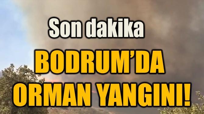 BODRUM'DA ORMAN YANGINI!