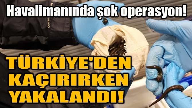 TÜRKİYE'DEN KAÇIRIRKEN YAKALANDI!