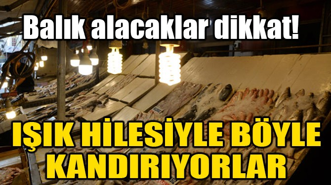 BALIK ALACAKLAR DİKKAT!