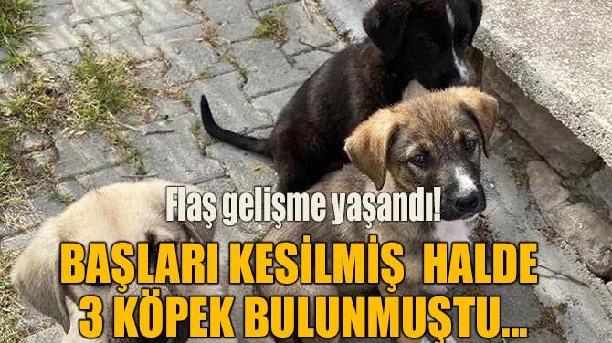 BAŞLARI KESİLMİŞ HALDE 3 KÖPEK BULUNMUŞTU...