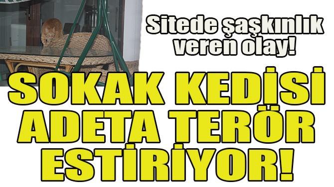 SOKAK KEDİSİ ADETA TERÖR ESTİRİYOR!