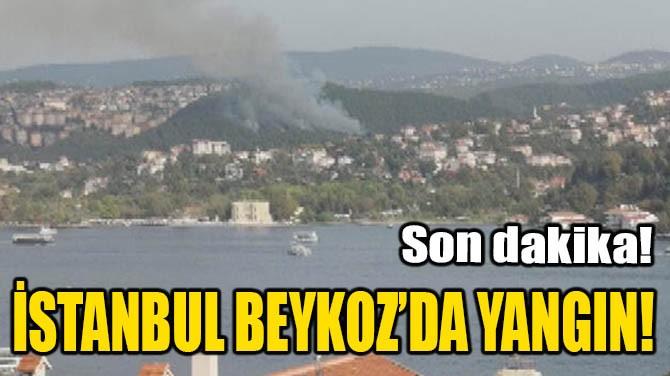 İSTANBUL BEYKOZ'DA YANGIN!