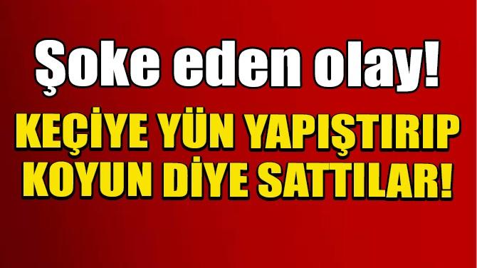 PAKİSTAN'DA KEÇİYİ KURBANLIK KOYUN DİYE SATTILAR!