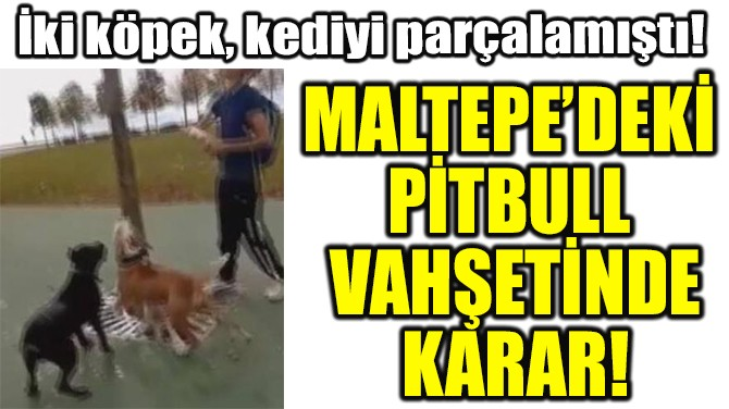 MALTEPE'DEKİ  PİTBULL  VAHŞETİNDE KARAR!