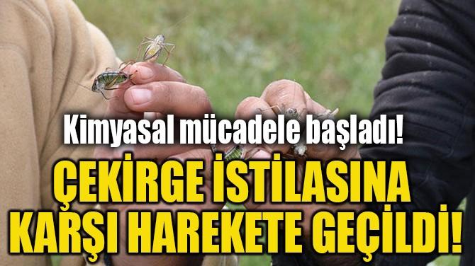 ÇEKİRGE İSTİLASINA  KARŞI HAREKETE GEÇİLDİ!