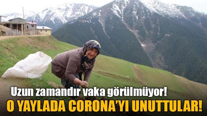 O YAYLADA CORONAVİRÜS'Ü UNUTTULAR!