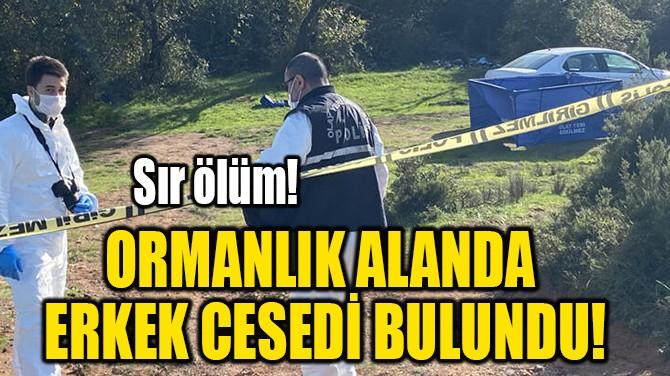 ORMANLIK ALANDA ERKEK CESEDİ BULUNDU!