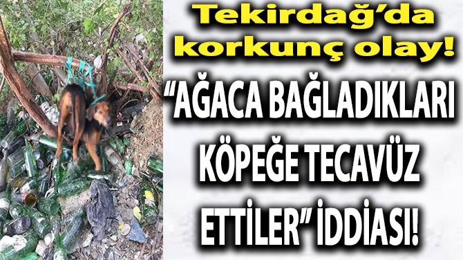"""""""AĞACA BAĞLADIKLARI KÖPEĞE TECAVÜZ ETTİLER"""" İDDİASI!"""