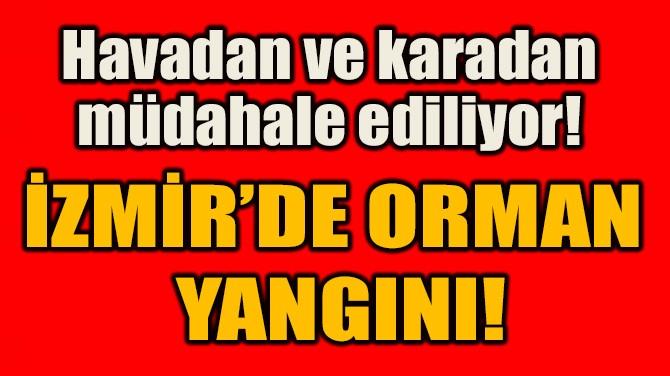 İZMİR'DE ORMAN  YANGINI!