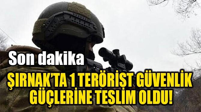 ŞIRNAK'TA 1 TERÖRİST GÜVENLİK  GÜÇLERİNE TESLİM OLDU!