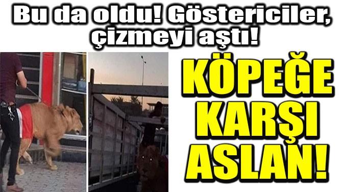 KÖPEĞE KARŞI ASLAN!