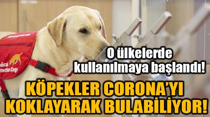 KÖPEKLER CORONA'YI KOKLAYARAK BULABİLİYOR!