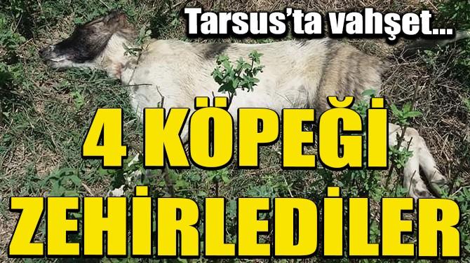 TARSUS'TA 4 KÖPEĞİ ZEHİRLEDİLER