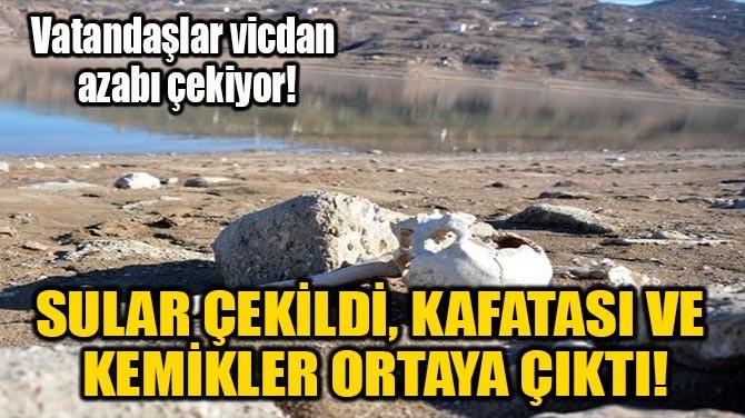 SULAR ÇEKİLDİ, KAFATASI VE KEMİKLER ORTAYA ÇIKTI!