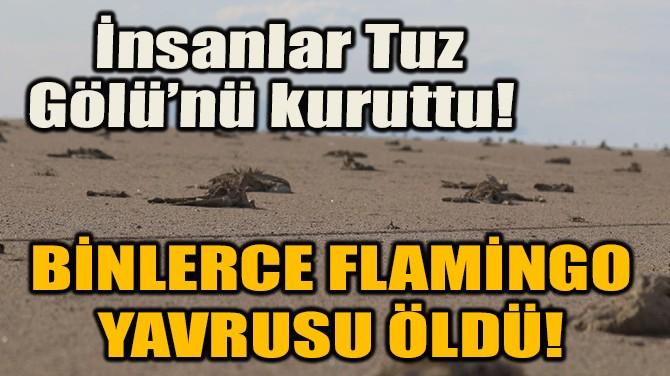 TUZ GÖLÜ KURUDU BİNLERCE FLAMİNGO YAVRUSU ÖLDÜ!