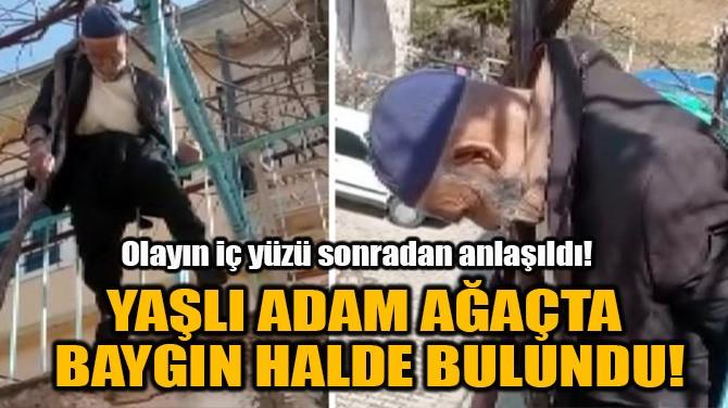 YAŞLI ADAM AĞAÇTA  BAYGIN HALDE BULUNDU!