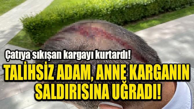 TALİHSİZ ADAM, ANNE KARGANIN  SALDIRISINA UĞRADI!