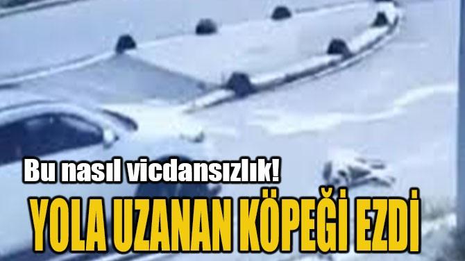 YOLA UZANAN KÖPEĞİ EZDİ