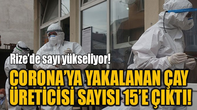 CORONA'YA YAKALANAN ÇAY  ÜRETİCİSİ SAYISI 15'E ÇIKTI!