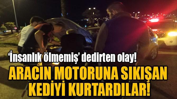 ARACIN MOTORUNA SIKIŞAN  KEDİYİ KURTARDILAR!