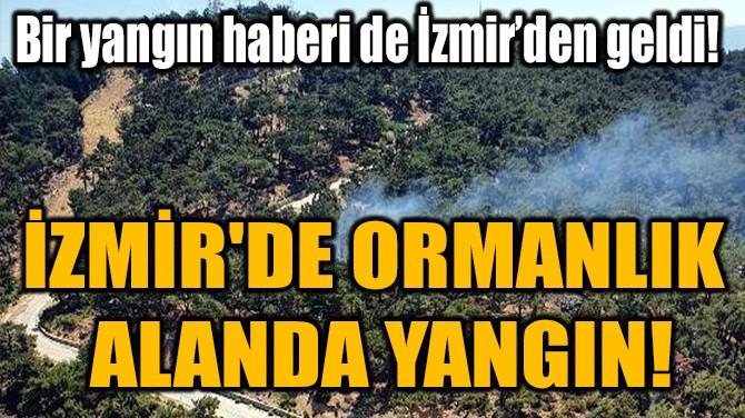 İZMİR'DE ORMANLIK  ALANDA YANGIN!