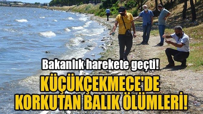 KÜÇÜKÇEKMECE'DE KORKUTAN BALIK ÖLÜMLERİ!