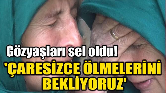 'ÇARESİZCE ÖLMELERİNİ  BEKLİYORUZ'