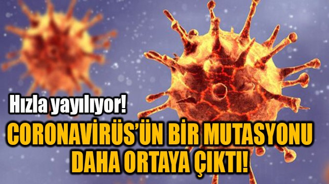 CORONAVİRÜS'ÜN BİR MUTASYONU DAHA ORTAYA ÇIKTI!