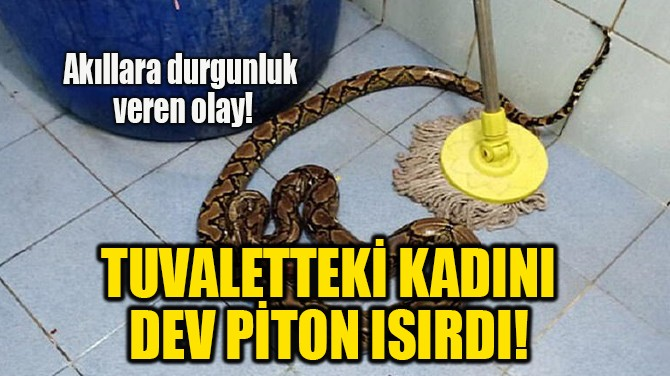 TUVALETTEKİ KADINI DEV PİTON ISIRDI!