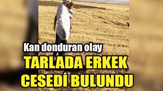 TARLADA ERKEK CESEDİ BULUNDU
