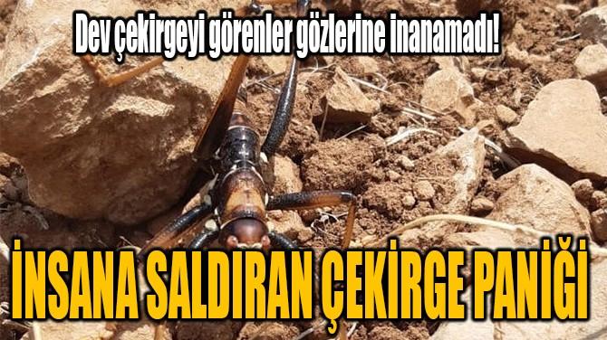 İNSANA SALDIRAN ÇEKİRGE PANİĞİ