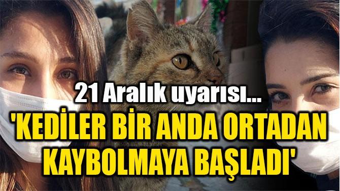 'KEDİLER BİR ANDA ORTADAN  KAYBOLMAYA BAŞLADI'