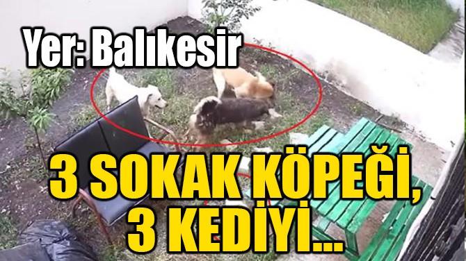 3 SOKAK KÖPEĞİ, 3 KEDİYİ TELEF ETTİ!