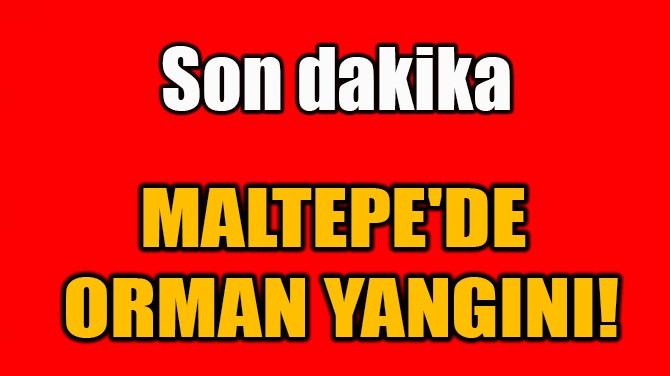 MALTEPE'DE  ORMAN YANGINI!