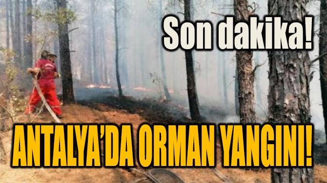 SON DAKİKA... ANTALYA'DA ORMAN YANGINI