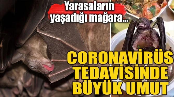CORONAVİRÜS TEDAVİSİNDE BÜYÜK UMUT