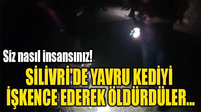 SİLİVRİ'DE YAVRU KEDİYİ  İŞKENCE EDEREK ÖLDÜRDÜLER...