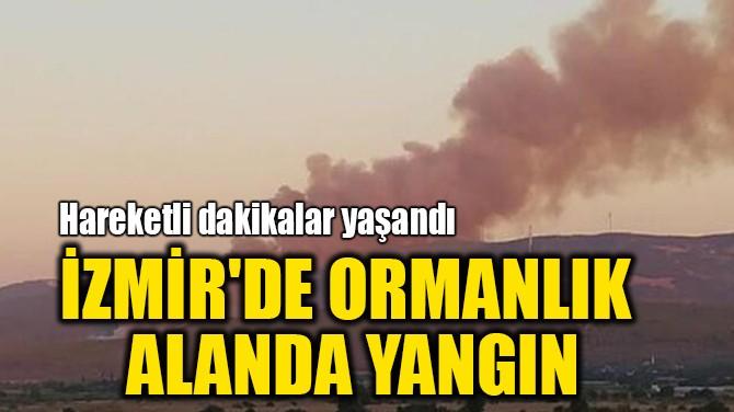 İZMİR'DE ORMANLIK ALANDA YANGIN