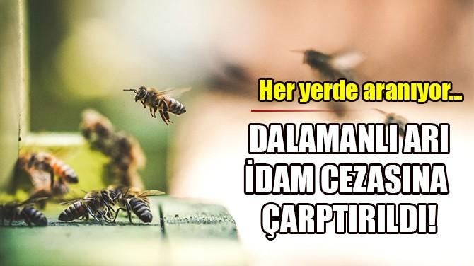 DALAMANLI ARI İDAM CEZASINA ÇARPTIRILDI!
