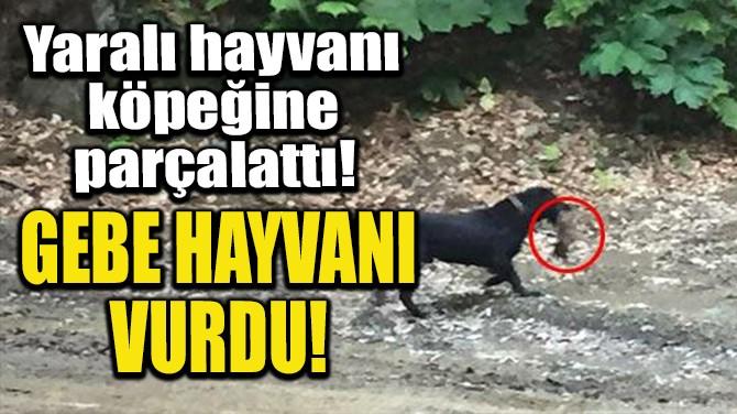 GEBE HAYVANI VURDU!