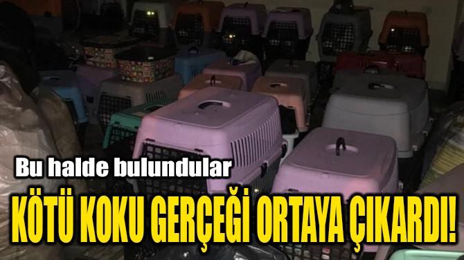 KÖTÜ KOKU GERÇEĞİ ORTAYA ÇIKARDI!