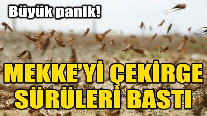 MEKKE'Yİ ÇEKİRGE SÜRÜLERİ BASTI!