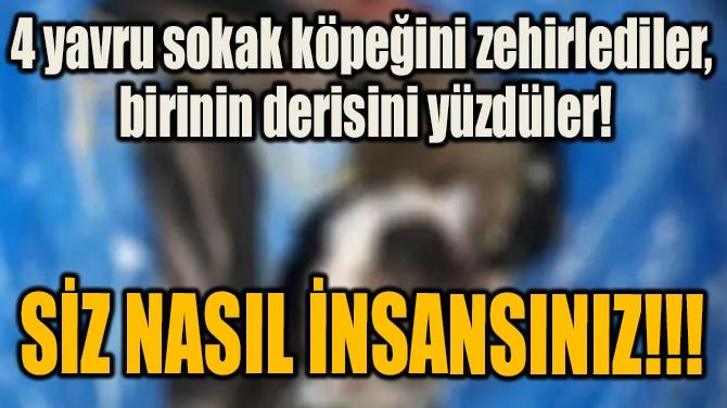 SİZ NASIL İNSANSINIZ!!!