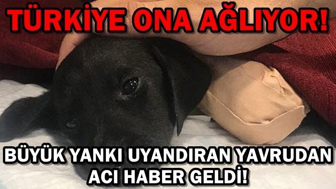 BÜYÜK YANKI UYANDIRAN YAVRUDAN ACI HABER GELDİ!